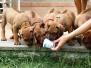Moje štěňátka s / My puppies with IMKAHENA FIONA OF SHONA (AZANIA)